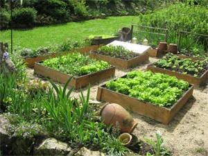 toute l 39 information utile pour votre potager un jardin potager c 39 est si facile. Black Bedroom Furniture Sets. Home Design Ideas